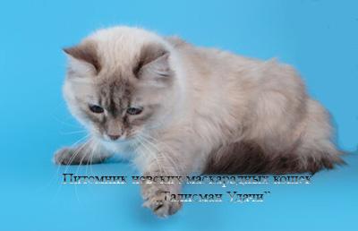 Невский кот