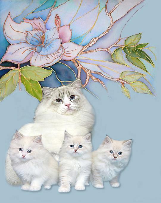 В питомнике невских маскарадных кошек